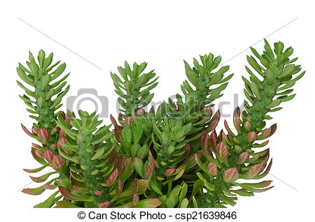 Ornamental plant Images and Stock Photos. 98,157 Ornamental plant.