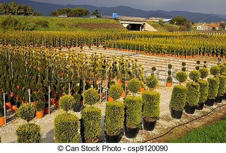 Stock Photography of view Ornamental Nurseries.