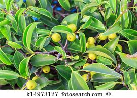 Ornamental plant Stock Photos and Images. 95,879 ornamental plant.