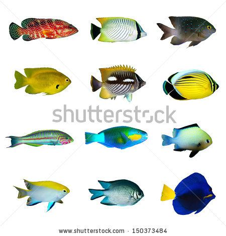 1000+ images about tropical fish on Pinterest.