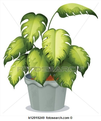 Non flowering plants clipart.