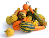 Stock Images of Pile of Colorful Ornamental Gourds k6000426.