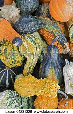 Stock Image of Various ornamental gourds (Cucurbita sp.