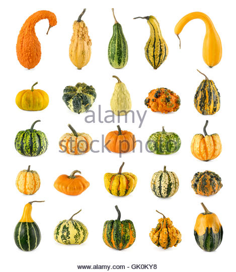 Gourds Ornamental Stock Photos & Gourds Ornamental Stock Images.