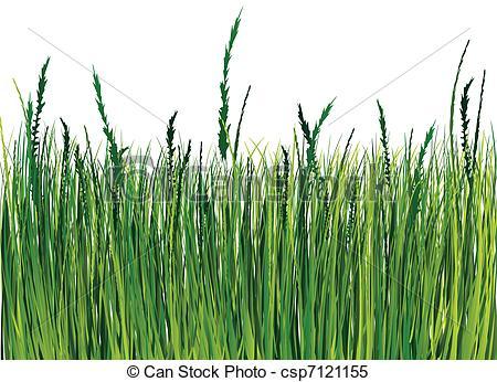 Ornamental grass Vector Clip Art Illustrations. 2,248 Ornamental.