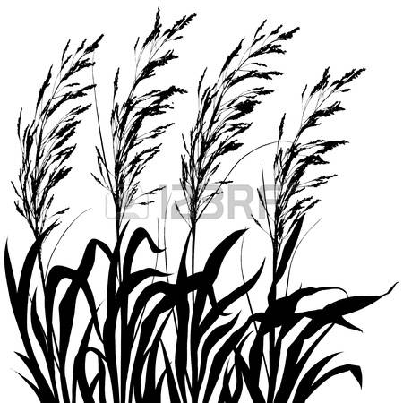 4,834 Ornamental Grass Cliparts, Stock Vector And Royalty Free.