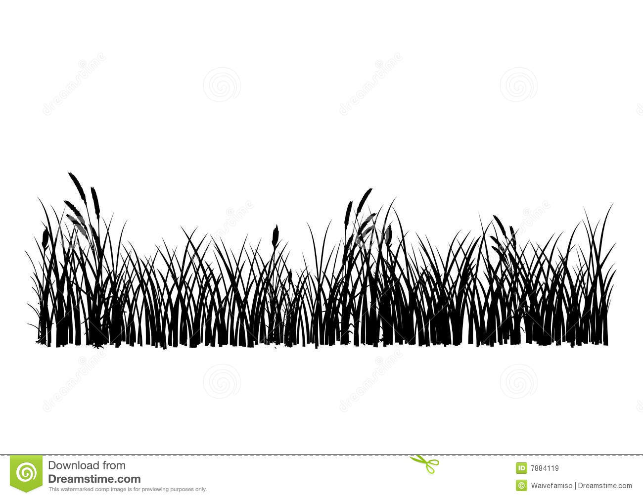 Isolated Ornamental Grass On Black Royalty Free Stock Photo.