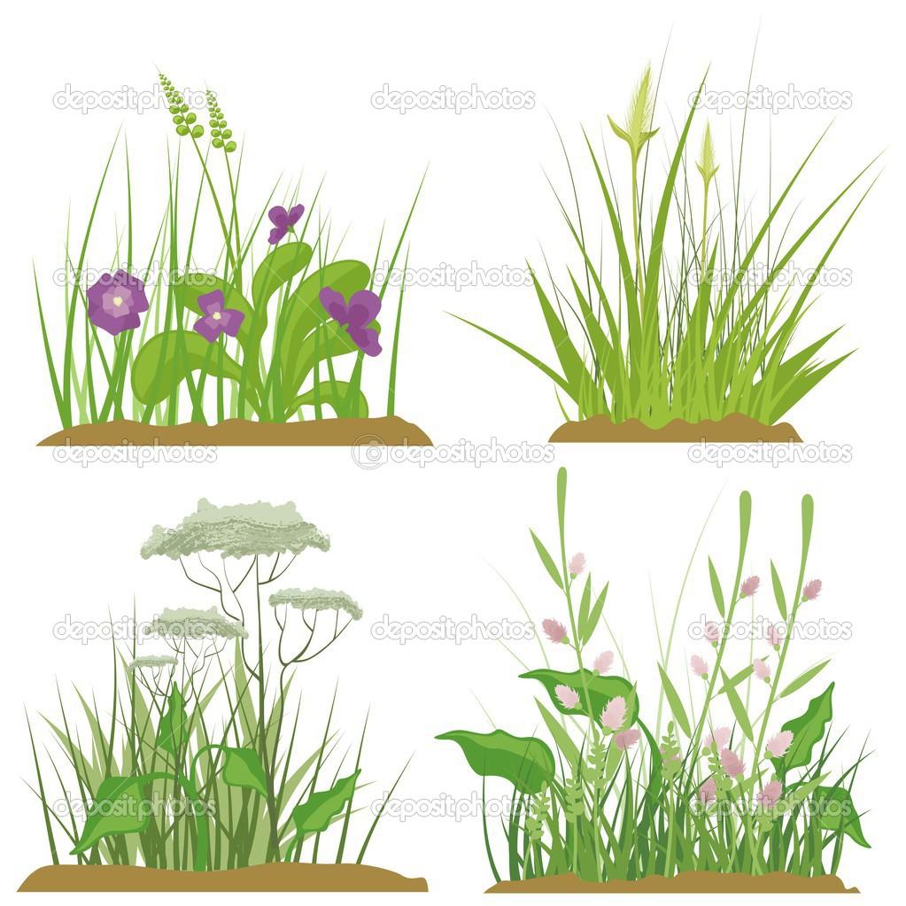A set of floral and grass design elements, vector illustration.
