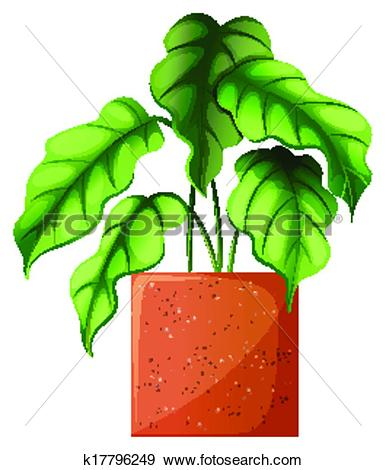 Clip Art of A leafy green ornamental plant k17796249.