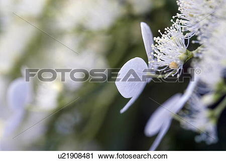 Stock Photography of outdoors, flora, belvedere, flowers, plants.