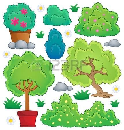 Ornamental Bush Stock Photos Images. Royalty Free Ornamental Bush.