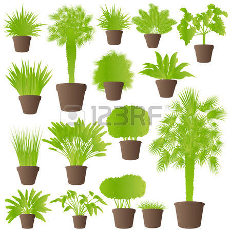 11,584 Shrubs Stock Vector Illustration And Royalty Free Shrubs.