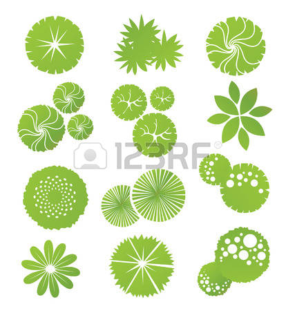 823 Ornamental Shrub Cliparts, Stock Vector And Royalty Free.