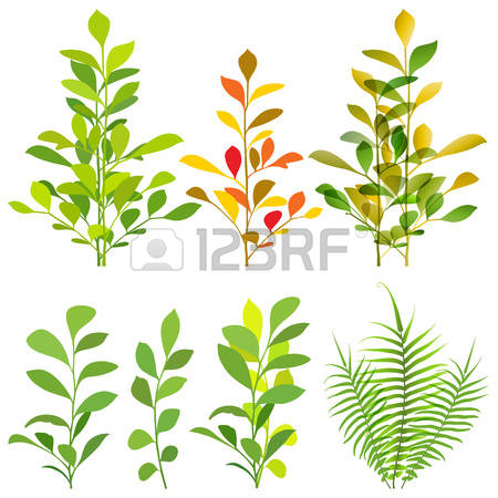 698 Ornamental Shrub Cliparts, Stock Vector And Royalty Free.
