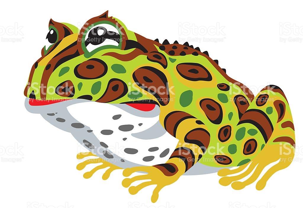 Ornate horned frog clipart #19