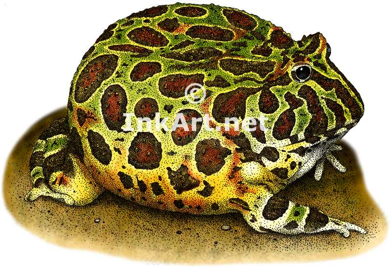 1000+ images about Illustrations of Frogs on Pinterest.