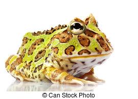Ornate horned frog clipart #15