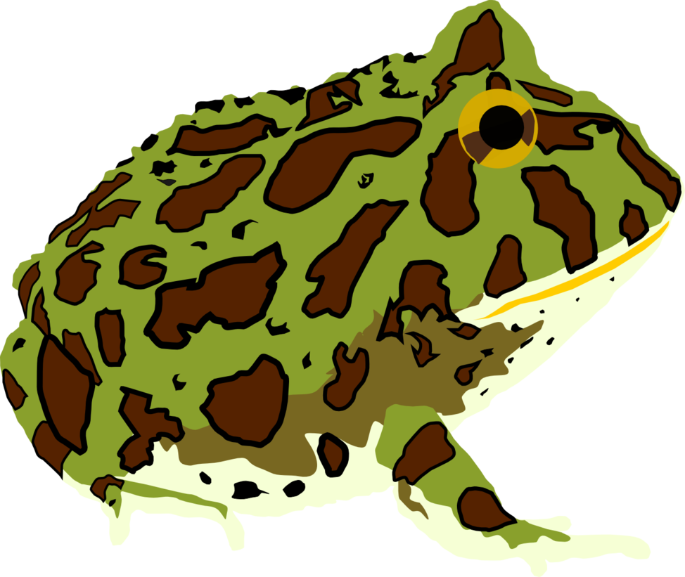 Ornate Pacman Frog by Michell.