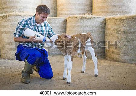 Stock Photography of Farmer Hand Rearing Orphaned Calf 40301.
