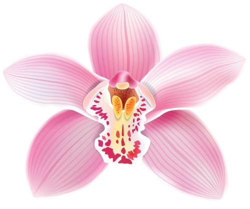 Orquideas clipart - Clipground