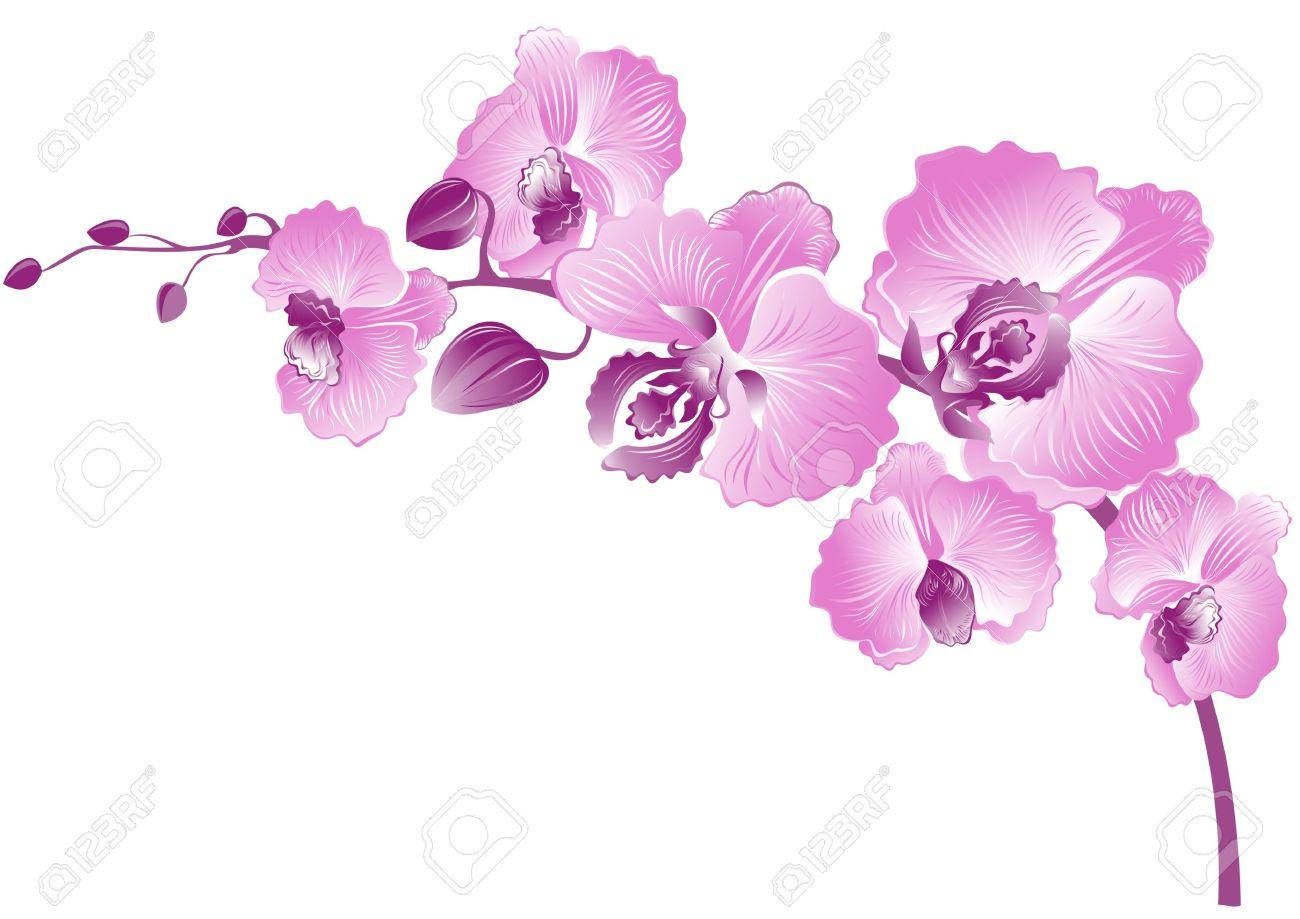 Purple orchid clipart.