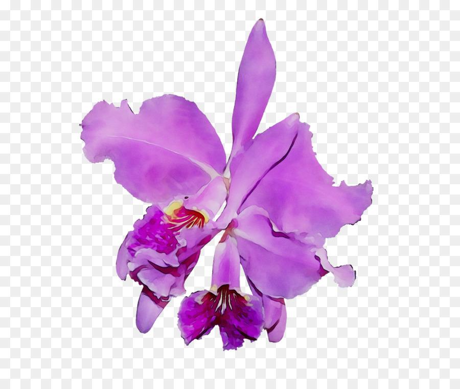 Crimson Cattleya, Las Orquídeas, La Polilla De Las Orquídeas.