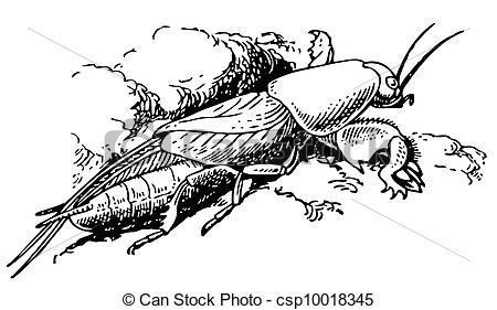 Orthoptera Stock Illustrations. 32 Orthoptera clip art images and.