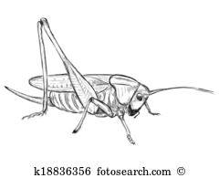 Orthoptera Clip Art Vector Graphics. 20 orthoptera EPS clipart.