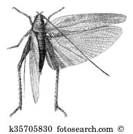 Orthoptera Clip Art and Stock Illustrations. 14 orthoptera EPS.