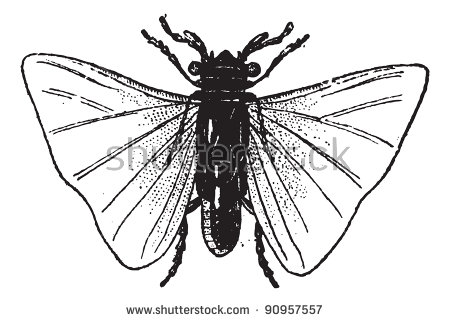 Orthoptera Stock Vectors, Images & Vector Art.