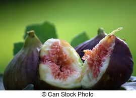 Stock Photography of Ficus.