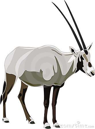 Oryx Stock Illustrations.