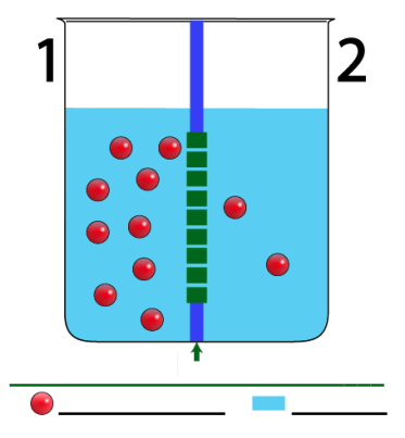 Osmosis Tutorial 2: Osmotic Pressure, Interactive Diagrams and a.