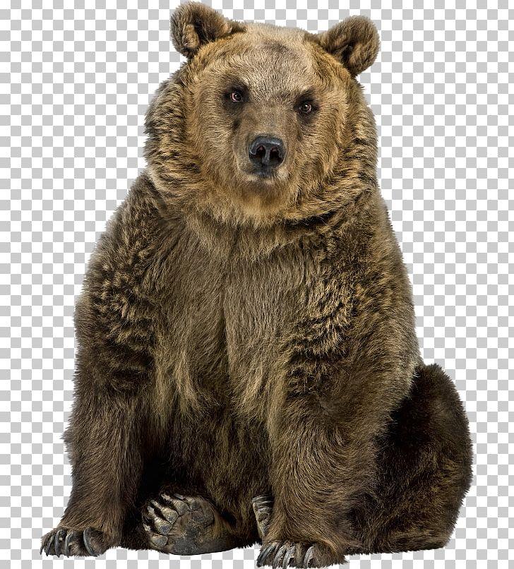 Brown Bear American Black Bear Polar Bear El Oso Pardo PNG.