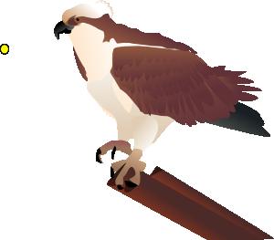 Osprey Standing On Branch Clip Art at Clker.com.
