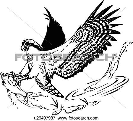 Clip Art of illustration, lineart, animal, osprey, bird u26497987.