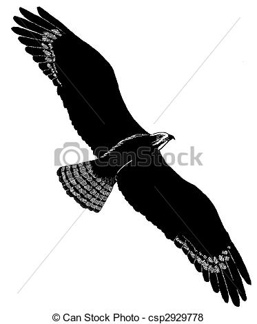 Osprey Illustrations and Clipart. 30 Osprey royalty free.