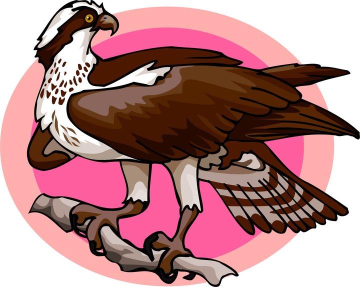 Free Osprey Clipart.