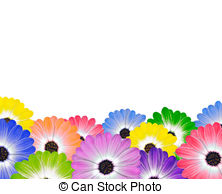 Osteospermum Illustrations and Stock Art. 79 Osteospermum.