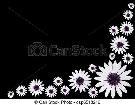 Osteospermum Stock Photos and Images. 966 Osteospermum pictures.