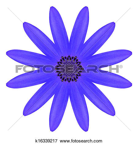 Stock Illustration of Blue Osteospermum Daisy Flower Kaleidoscope.