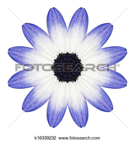 Clip Art of Blue Osteospermum Daisy Flower Kaleidoscope Isolated.