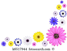 Osteospermum Illustrations and Stock Art. 24 osteospermum.