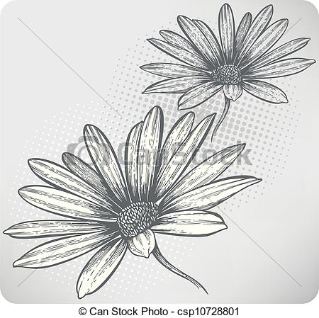 Vector Clipart of Blooming flowers Osteospermum, hand.