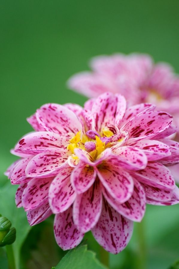 1000+ images about Wow flowers on Pinterest.