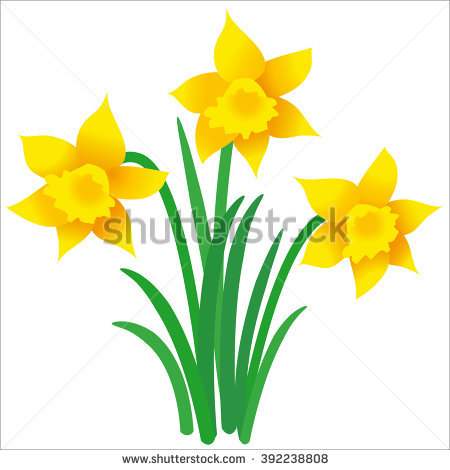 Daffodil Stock Images, Royalty.