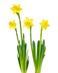 Bilder und Videos suchen: amaryllis.