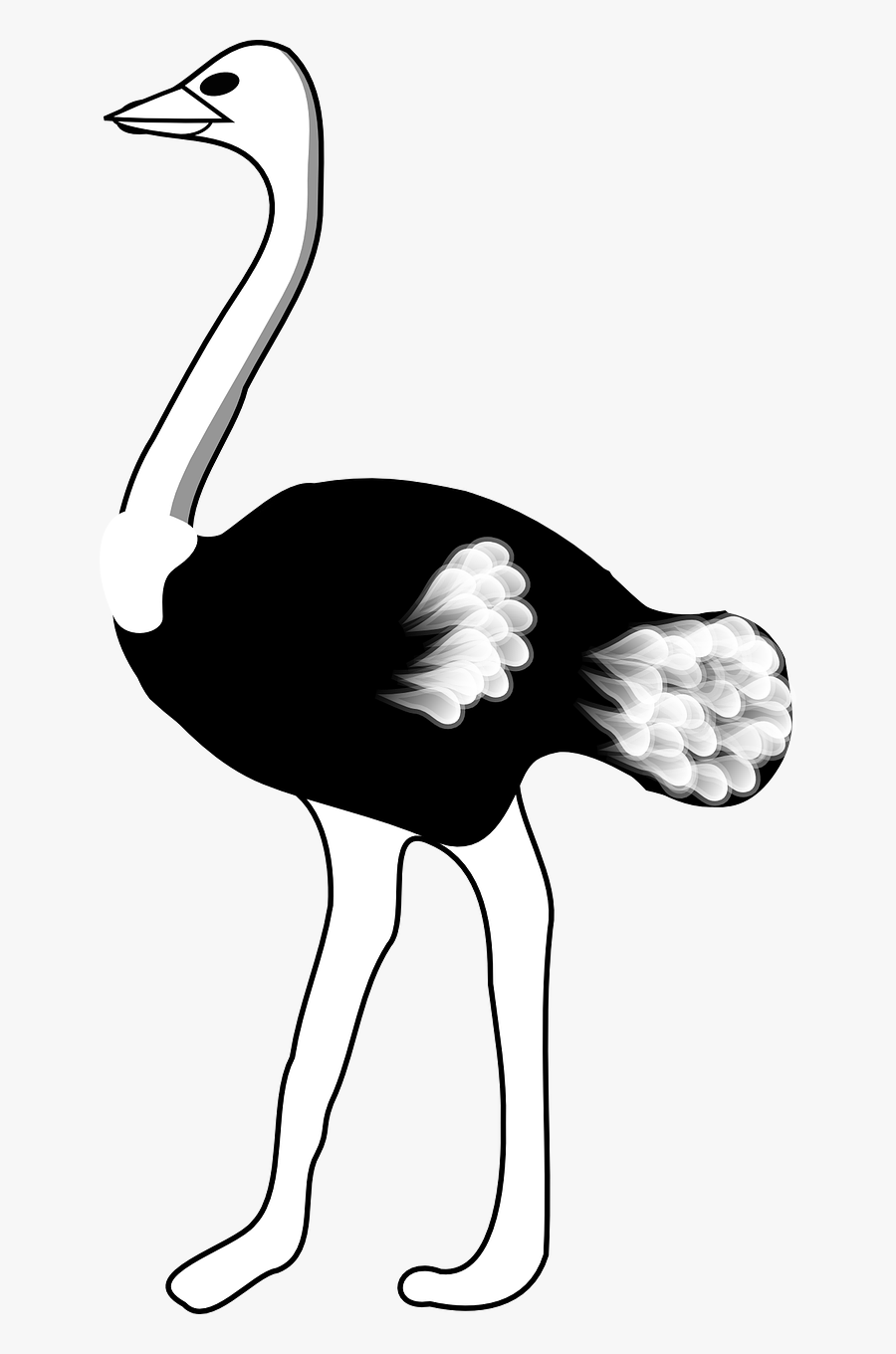 Ostrich Black And White , Free Transparent Clipart.