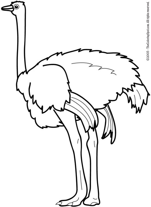 black and white clipart ostrich #3