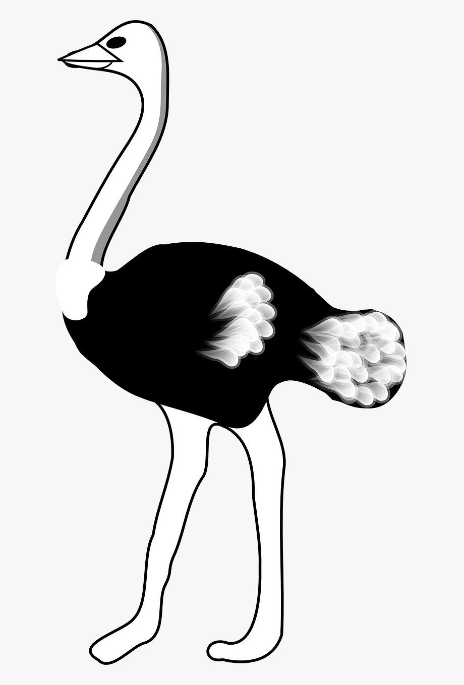 Ostrich Black And White #860658.